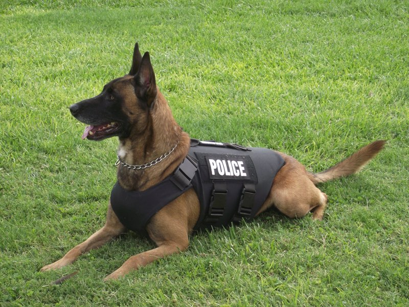 Healthy Donation from Willow Grove-Based Asplundh Foundation Helps Launch Horsham's K-9 Unit