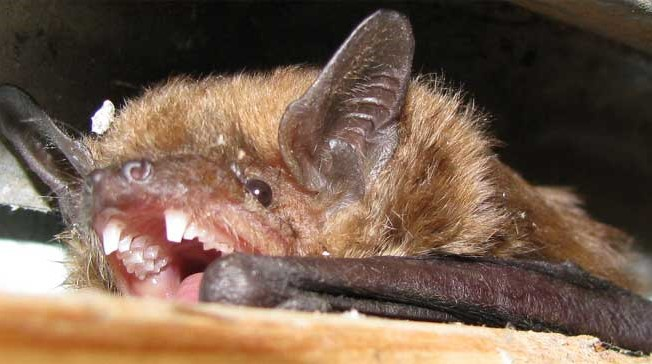 Biochemistry Major from Hatboro Joins Study on Bats and Organic Pest Management
