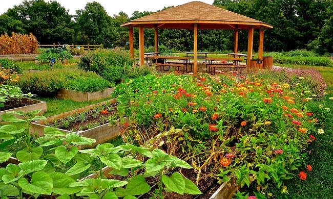 Lankenau Creates Organic Food Farm to Help Patients Live Healthier