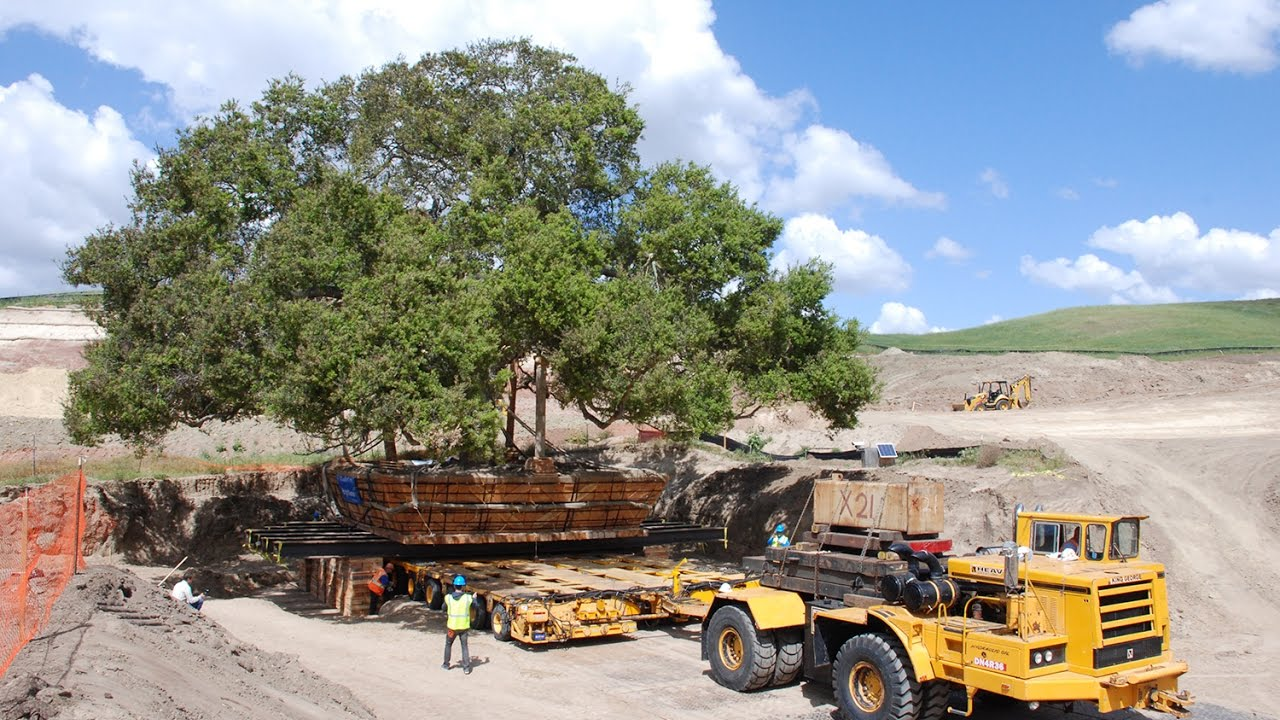 Plymouth Meeting's BrightView Moves 350-Ton California Oak Tree to New Home