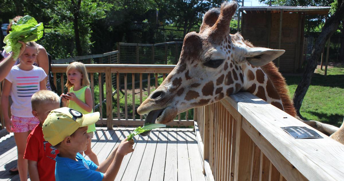 Elmwood Park Zoo earns Autism Center designation