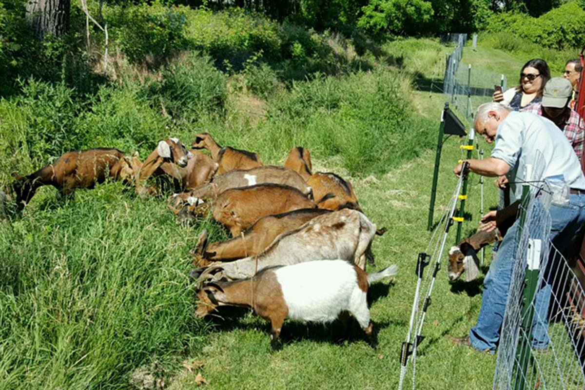 Goats getting to the tough landscaping spots in municipalities across Montco