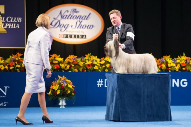 Greater Philadelphia Expo Center in Oaks to Welcome National Dog Show, No Spectators