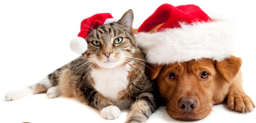 District Attorney's office kicks off 12th annual SPCA Holiday Support Drive