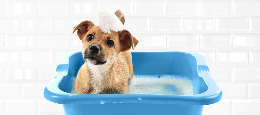 Pet Valu to donate all proceeds from self-serve dog washes to Animal Cancer Foundation
