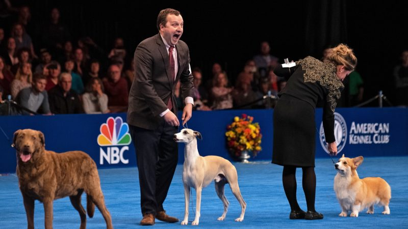 Esquire: 70-hour National Dog Show in Oaks Full of Anger, Chaos and Disappointment