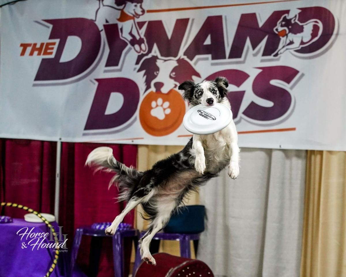 Expo Center at Oaks Welcomed Greater Philadelphia Pet Expo Once Again Earlier This Month