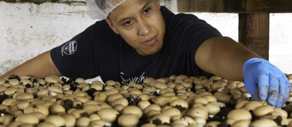 CNN: Mushroom Farm in Landenberg 'Upping Its Game' to Keep Pace with Increasing Demand