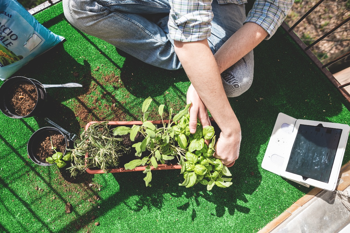 Growing Interest in Home Gardening Floods Local Seed Giant with Vegetable Orders