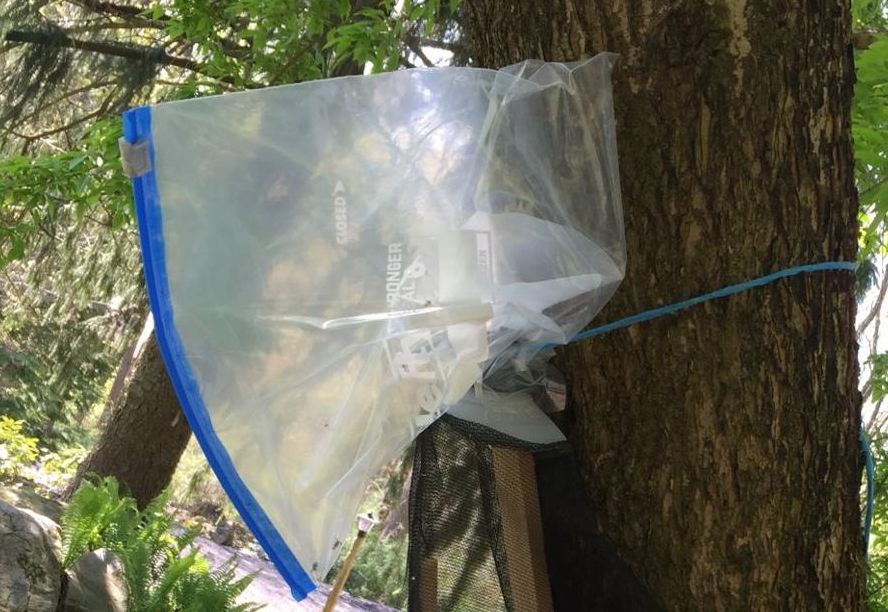 Penn State Extension: Circle Traps Are Safe Way To Trap Lots of Spotted Lanternfly