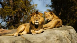 Zoo - MONTCO.Today
