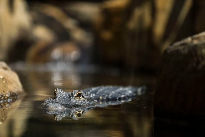 Prompt Reactions Kept Elmwood Park Zoo Animals Safe During Tropical Storm Isaias