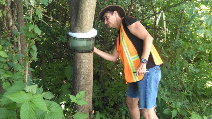 Cooperative Spotted Lanternfly Program Consolidates State Efforts to Fight Invasive Insect