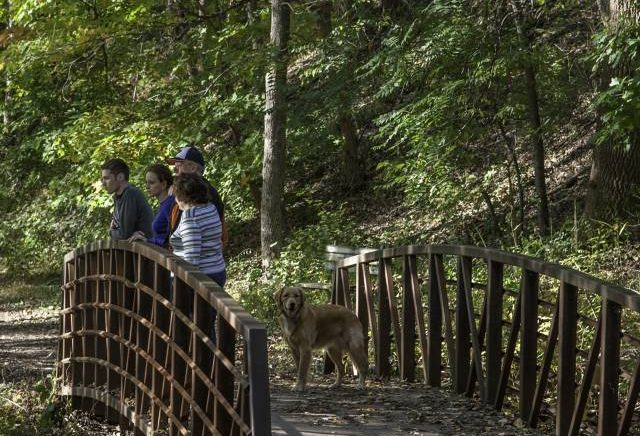 Fun Dog-Friendly Activities to Do in Montco This Fall