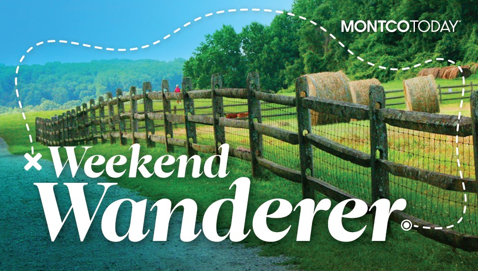 Weekend Wanderer: Leaving Pets After a Pandemic Is Hard