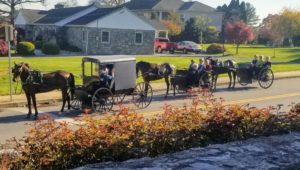 Amish Buggies in Lancaster