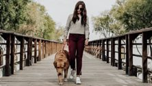 Montco dog trails