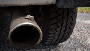 Invasive Pest spotted Lanternfly on car