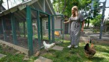jenkintown colonial chicken coop