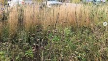 rain garden at Whiting Forest of Dow Gardens