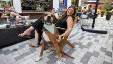 doggie at landing kitchen in bala cynwyd