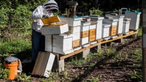 Allan Lattanzi, a general contractor and professional beekeeper who owns Yerkes Honey Farms in Collegeville