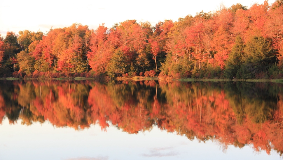 Longwood Gardens Arborist Suggests Tropical Storms May Be Detrimental to Leaf-peeping Season