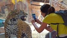 Elmwood Park Zoo Leopard