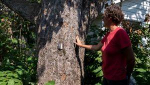 trees at ambler campus temple