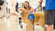 One of the dogs with the Wagging Dog Brigade at the Philadelphia Airport is petted by a waiting traveler.