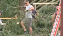 Man cleaning up backyard tree.