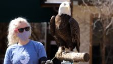 elmwood park zoo eagle