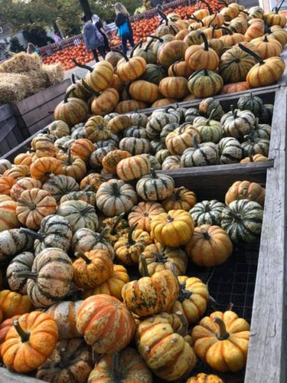 Multicolored pumpkins at Merrymead Farm in Lansdale.