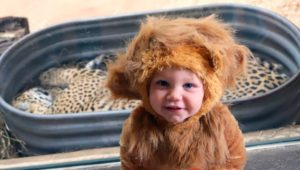 baby dressed at lion at boo to the flu